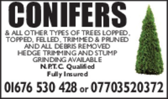 Conifer Tree Surgery Advert
